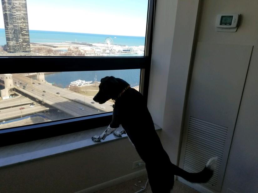 Fly Observes Chicago's Navy Pier