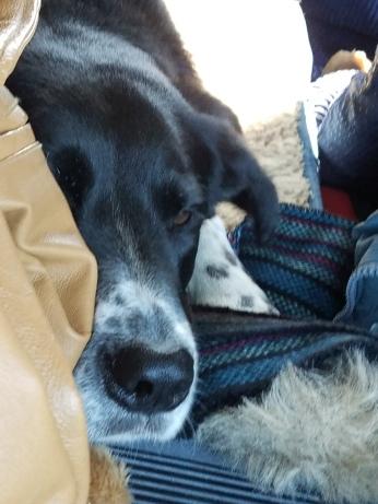 Fly sleeping in truck en route to Toledo