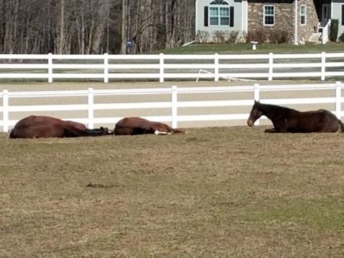Three Horses Lying Down