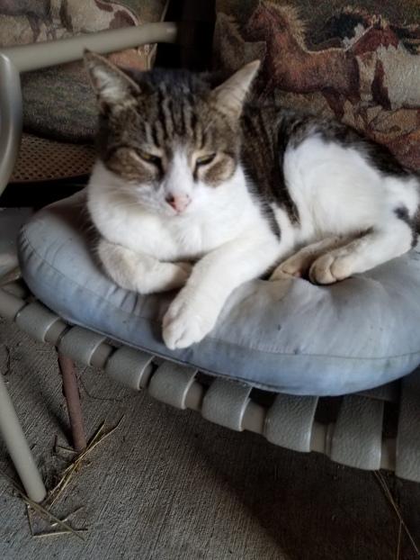 Barn Cat Photo
